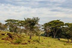 Alcuni alberi immagine stock libera da diritti