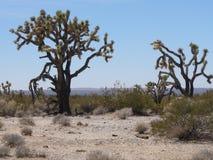 Alcuni alberi nel deserto nel Nevada Immagine Stock
