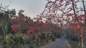 alcuni fiori di rosso immagini stock