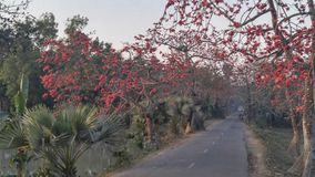 alcuni fiori di rosso fotografia stock libera da diritti