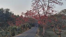 alcuni fiori di rosso fotografia stock