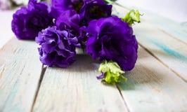 Alcuni fiori nel giardino fotografia stock