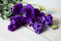 Alcuni fiori nel giardino immagini stock