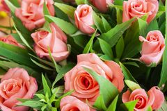 Alcuni fiori nel giardino immagini stock libere da diritti