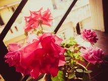 Alcuni fiori nostalgici immagini stock