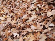 Alcuni fogli di autunno fotografia stock