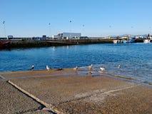 Alcuni gabbiani che raffreddano vicino al mare al porto a Cambados Galizia Spagna fotografia stock