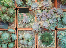 Alcuni generi di cactus immagine stock
