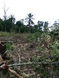 Alcuni hanno tagliato gli alberi immagine stock libera da diritti