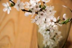 Alcuni rami con i fiori bianchi in vetro Fotografia Stock