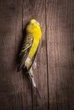 Alcuni uccelli non sono destinati per essere ingabbiati Fotografie Stock Libere da Diritti