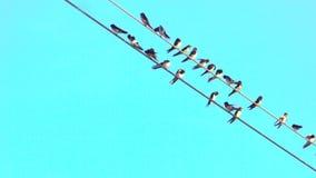 Alcuni uccelli sopra cavo con chiaro cielo blu nel fondo Sguardo pastello cute archivi video