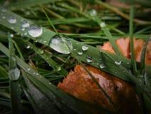 Alcuni waterdrops creati dopo la pioggia con la foglia fotografia stock