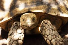 Aldabr of de reuzeschildpad van Seychellen in vijver bij openbaar park in Bangkok, Thailand royalty-vrije stock foto
