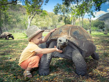 Aldabra giant tortoise and child. Child touching Aldabra giant tortoise. Mauritius stock image