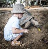 Aldabra giant tortoise feeding Stock Image