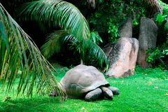 Aldabra giant tortoise, Grande Soeur, Inner Islands, Seychelles Stock Photography