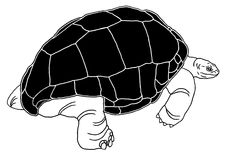 Aldabra giant tortoise Royalty Free Stock Photography