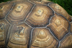 Aldabra Giant Tortoise Shell Detail Royalty Free Stock Photos