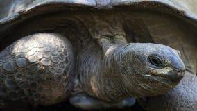 Aldabra gigantyczny tortoise, Seychelles Fotografia Stock
