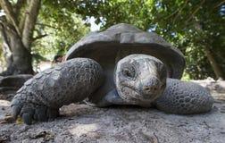 Aldabra gigantyczny tortoise w Seychelles Zdjęcia Stock