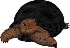 Aldabra reuzeschildpad vector illustratie