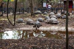Aldabra Reuzeschildpadden royalty-vrije stock fotografie