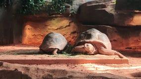 Aldabra-Schildkröte stockfoto