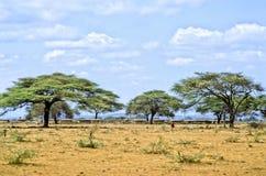 Aldea de Massai Fotografía de archivo