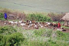 Aldea del Masai Fotografía de archivo libre de regalías
