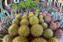 ALDEA, GRAN CANARIA, SPAIN - MARCH 10, 2017: Cactus garden in Gran Canaria island, Spain Stock Images