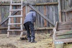Aldeano mayor que trabaja en una granja foto de archivo