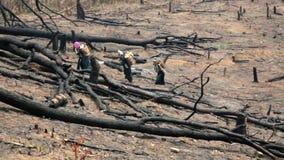 Aldeanos Carry Back y el caminar de Akha en el bosque quemado, Laos almacen de video