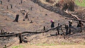 Aldeanos Carry Back y el caminar de Akha en el bosque quemado, Laos almacen de metraje de vídeo