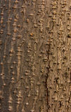 Alder bark Stock Photos