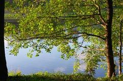Alder on coast of lake Royalty Free Stock Images