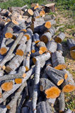 Alder firewood in farm Stock Photography
