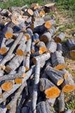 Alder firewood in farm. Fresh alder firewood in farm stock photography