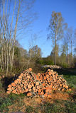 Alder firewood log stack in early spring Royalty Free Stock Photo