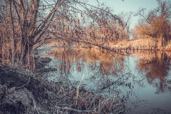 Alder and its reflection in the lake in early spring. The awakening of nature Royalty Free Stock Images
