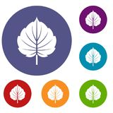 Alder leaf icons set. In flat circle red, blue and green color for web Stock Image