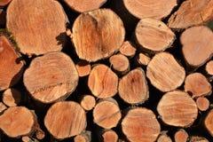 Alder logs on sunny day Stock Photos