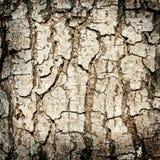 Alder tree  bark background Royalty Free Stock Photos