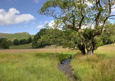 Alder tree and stream Royalty Free Stock Photography