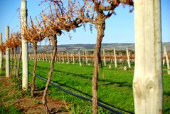 Aldinga Autumn Vineyard Royalty Free Stock Photos