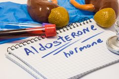 Aldosteronmineralokortikoidhormondiagnosekonzeptfoto Nebenniererinde mit Nieren, die dieses Steroid produziert stockbild