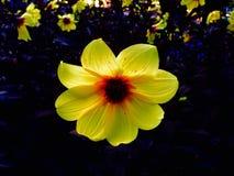 Alegría amarilla Imágenes de archivo libres de regalías