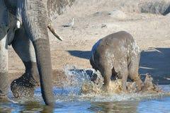 Alegría del elefante Imagen de archivo libre de regalías