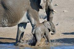 Alegría del elefante Fotografía de archivo libre de regalías