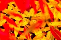 Alegría del otoño foto de archivo libre de regalías